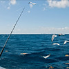 Fishing with the birds