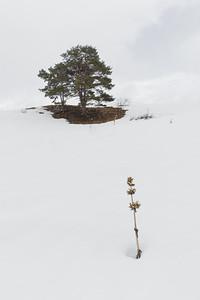 Lonely Tree #5