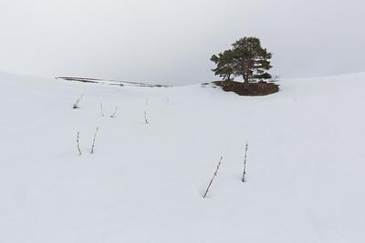 Lonely Tree #4