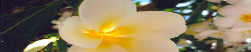 """I can't lay claim to this photograph of the sunlight showing through a flower. This photo is from a client who uses it on her website, <a href=""""http://www.Graceful-Power.com"""">http://www.Graceful-Power.com</a>"""
