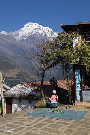 Nepali women in front of the South Annapurna, in a village near Landruk