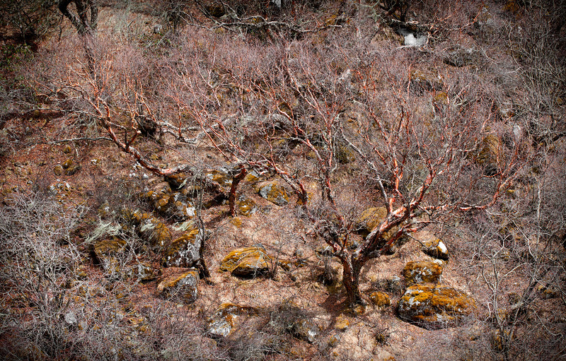 Paper Trees, Khumbu Valley - Nepal<br /> <br /> Leafless paper trees wait for spring in the Khumbu valley. Local legend tells that their wispy pink and white bark was once peeled off in small sheets and used for writing paper by the Tibetans.