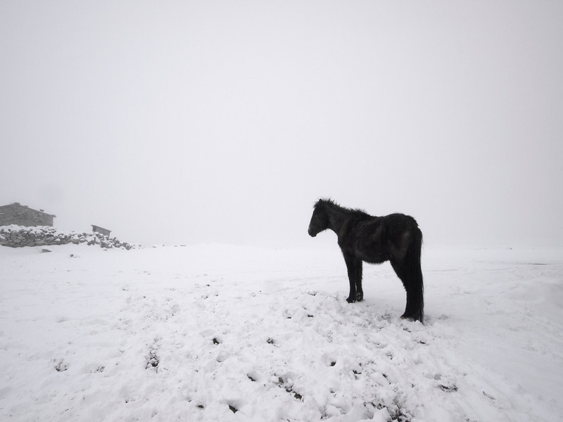 The Waiting Pony, Pheriche - Nepal<br /> <br /> Spring snow and low cloud in Pheriche (14,300 ft). The sky meets the ground without a joint, veiling the 20,000 foot peaks in the background, and quieting the landscape.