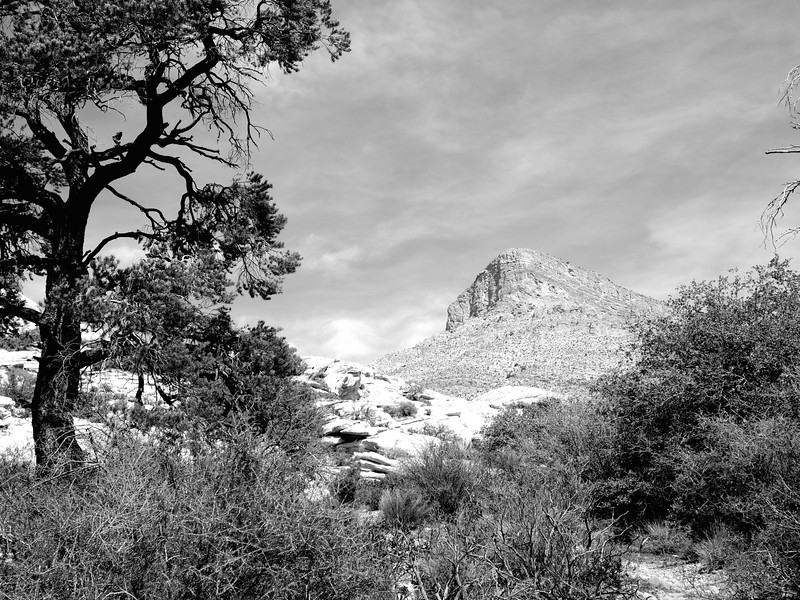 The Tree and the Mountain,  Red Rock Canyon - Near Las Vegas, Nevada
