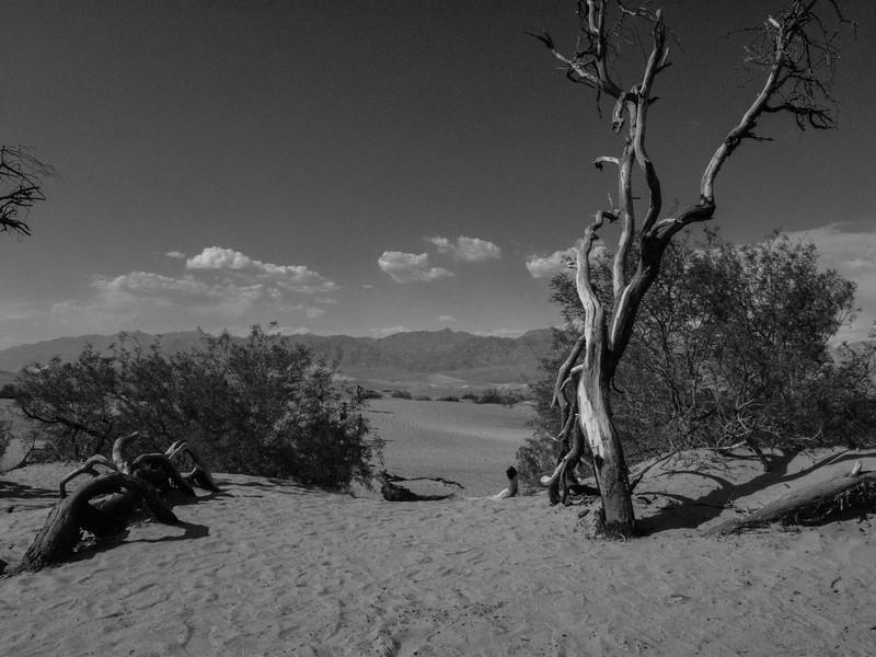 Mesquite Flat Sand Dunes.  Death Valley National Park, California