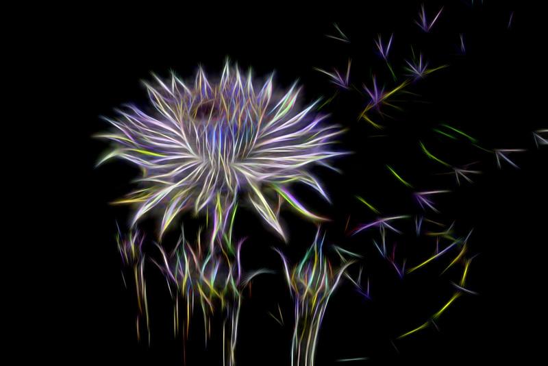 Night-blooming Cactus - Electrified