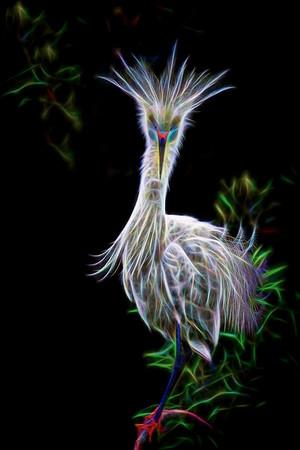 Snowy Egret - Hallucinate