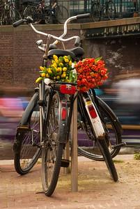 Amsterdam Bikes-1