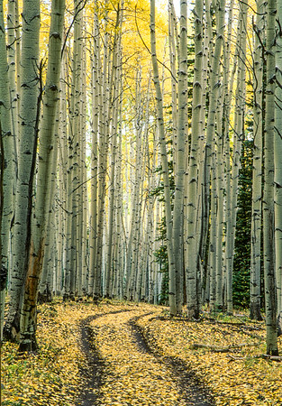 Narrow Road to Moonshine Park Colorado