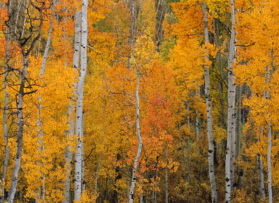 Aspen Grove Last Dollar Road