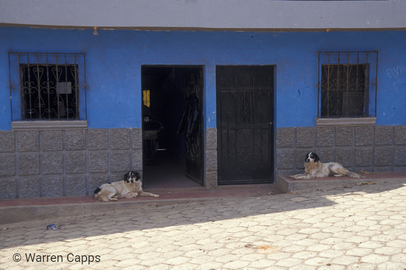 Two dogs and two doors.  Too real to be a setup!