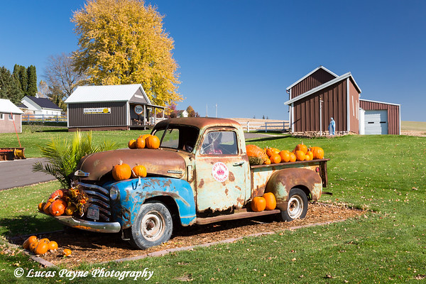 Old Chevrolet 3100 Pickup and pumpkins in Farmersburg, Iowa.<br /> <br /> October 25, 2017
