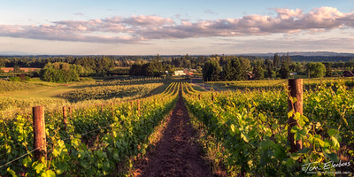 Durant Vineyards II, Willamette Valley Wine Country