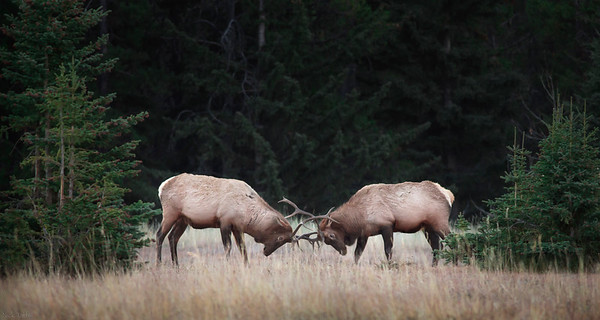 Proving Ground - Banff National Park, Alberta