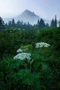 Misty Meadow - Kananaskis, Alberta