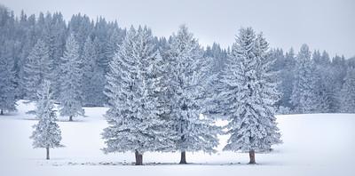 Freeze Over - Millarville, Alberta