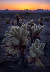 Twilight - Kofa, Arizona