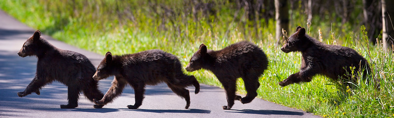 Hopping Along - Waterton National Park, Alberta
