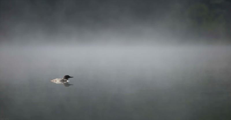 Through the Mist - Kananaskis, Alberta