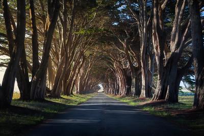 Tunnel Vision - Point Reyes National Seashore, California