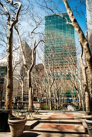 Winter Trees NYC