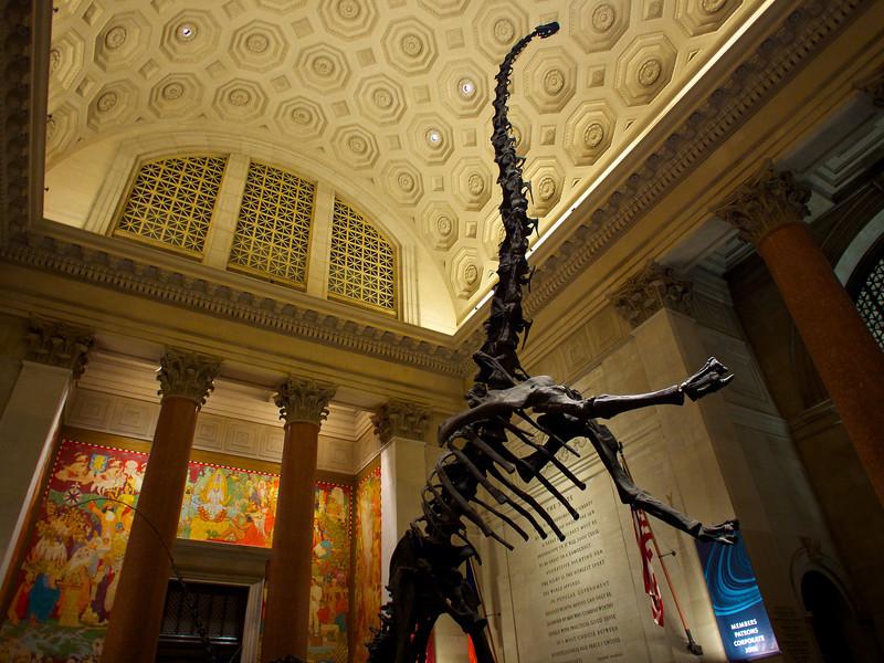 Skinny Dinosaur, Museum of Natural History - New York, New York