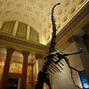 Skinny Dinosaur, Museum of Natural History - New York, New York