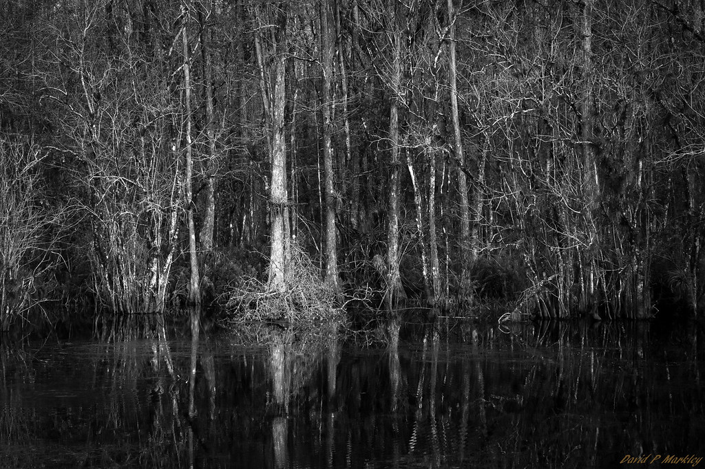 Swampy Waters