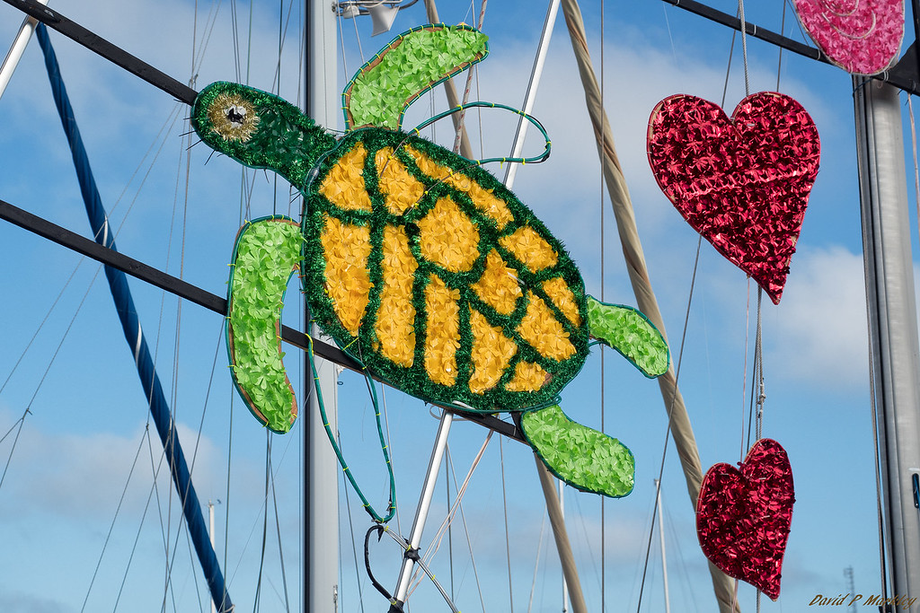 Sailing Turtle