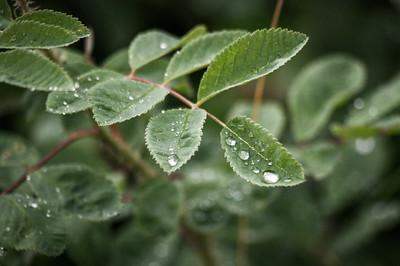 Water Drops 7