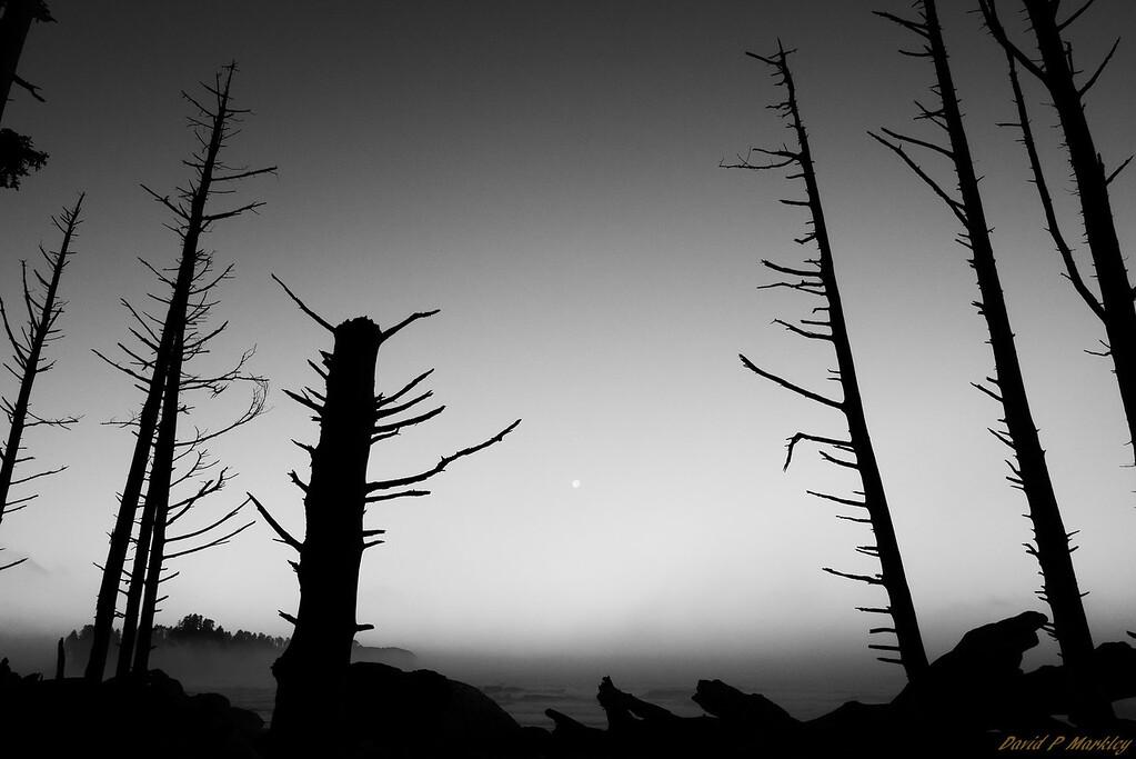Surrounding Silhouette