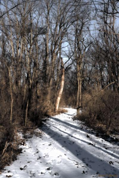 Shadow Trail