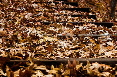 Fall Leaves Step 3