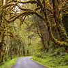 Rain Forest Road