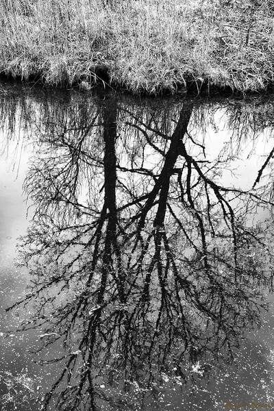 Glassy Tree