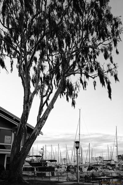 Harbor Shade