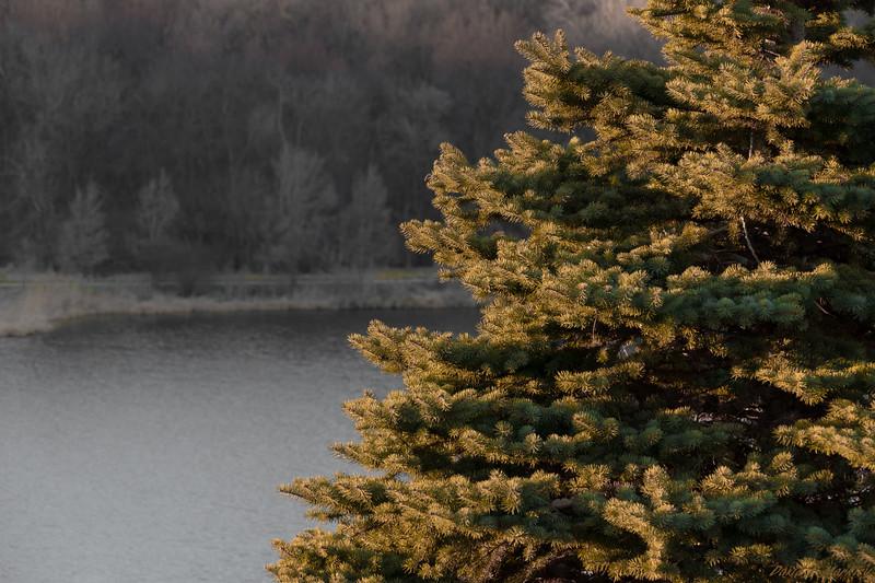 Tree Tips