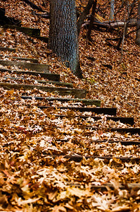 Fall Leaves Step 2