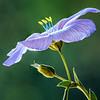 Pollination Invitation