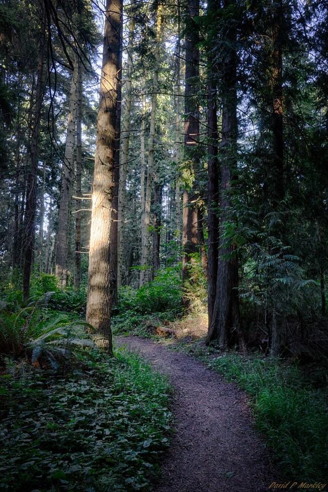 Primative Trail