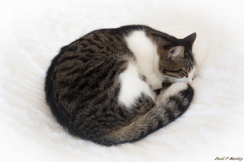 Hemingway Kitty