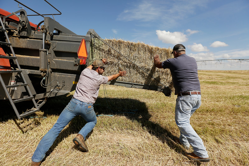BURBANK, WA - JUNE 19: RHD Inc. farm laborer Jacob Heinen, left, and potato digger driver Luciano De Leon try to remove a bale of Timothy hay from a Massey Ferguson 2170 baler before moving the baler to another property, at Walkley Farms, which RHD Inc. leases, on June 19, 2018, in Burbank, Washington. (Photo by Young Kwak/For The Washington Post)