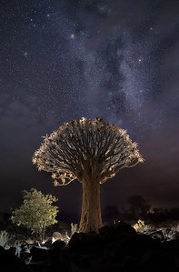 Quiver tree and Milky Way A733729