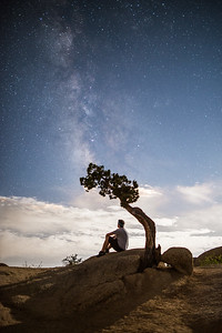 Juniper Tree Milky Way