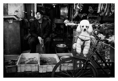 Dog meets meat (takes it all in) ::: Shanghai
