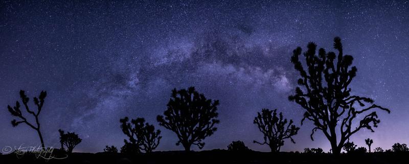 Tree with souls - Joshua Tree NP, CA