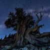 Time connection - Bristlecone Pine Forest, White Mountain, CA