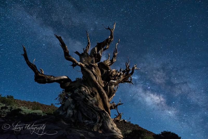 This eternity - White Mountain, CA