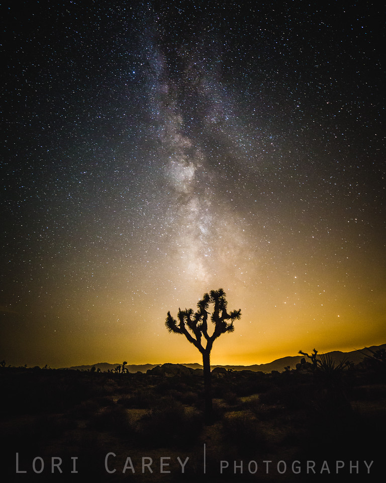 Milky Way and Joshua Tree silhouette, Joshua Tree National Park
