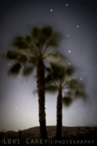 Wind, Palm Trees and Big Dipper